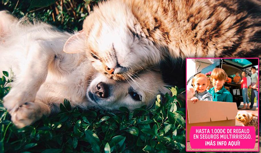 Seguro Mascotas salud