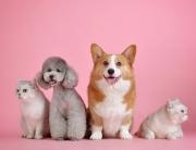 Seguros de Mascotas Adeslas