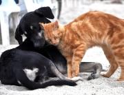 Seguro para mascotas en Benalmádena
