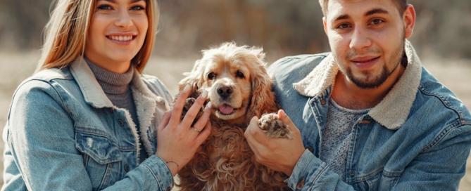Seguros de mascotas Torremolinos