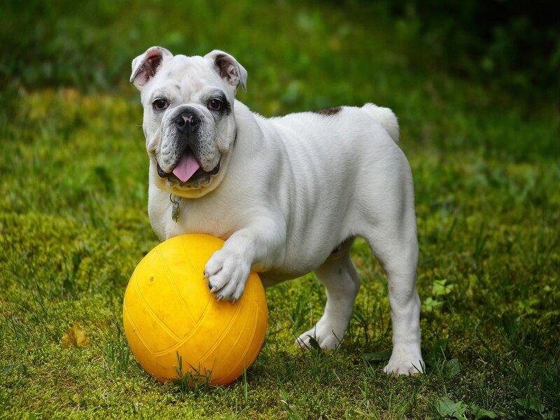 seguros para perros y gatos